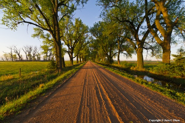 cottonwood_alley_web